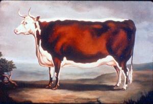 historic cow