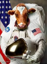 cow astronaut - photo #1